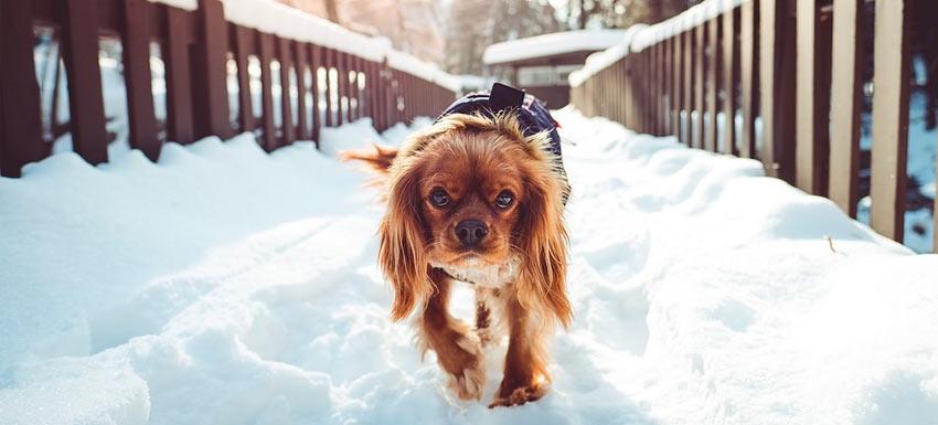 como proteger a tu perro del frio