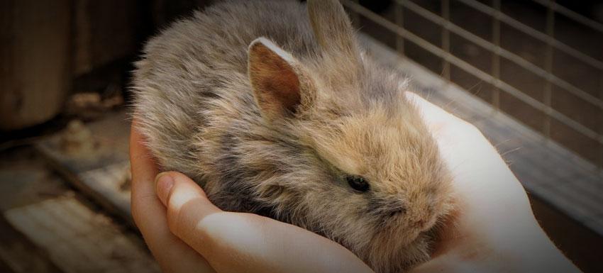¿Por qué es importante contratar un plan de salud para tu conejo?