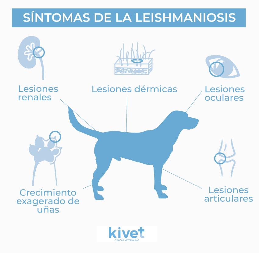 sintomas de la leishmaniosis en perros