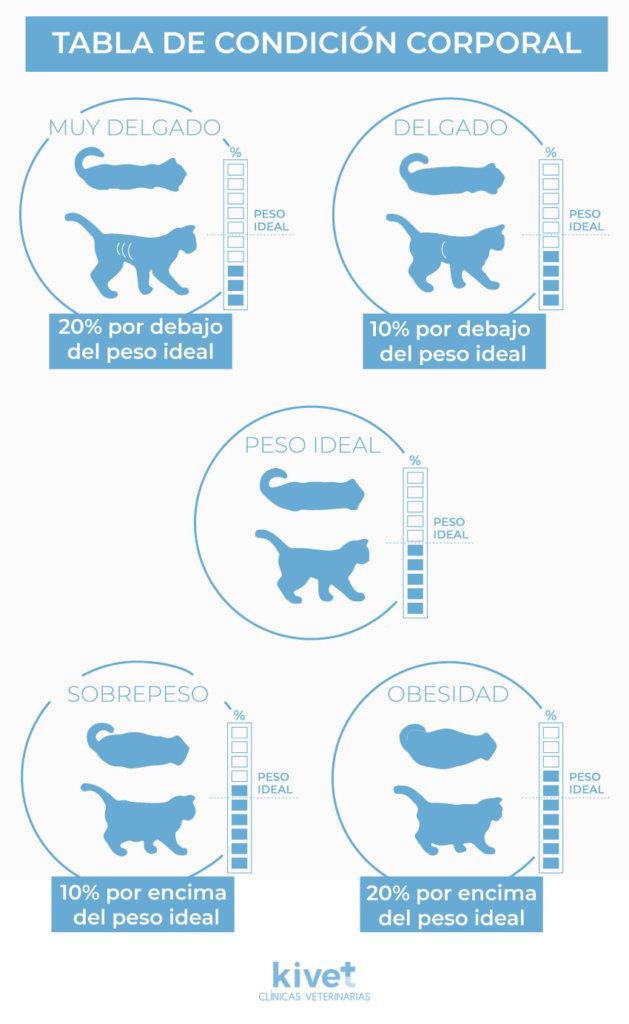 Tabla de condición corporal de Gatos