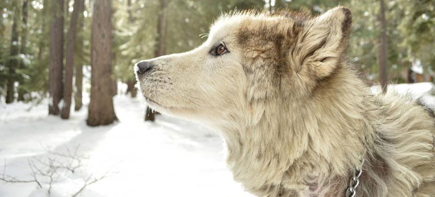Mantén a tu mascota protegida de los parásitos en invierno