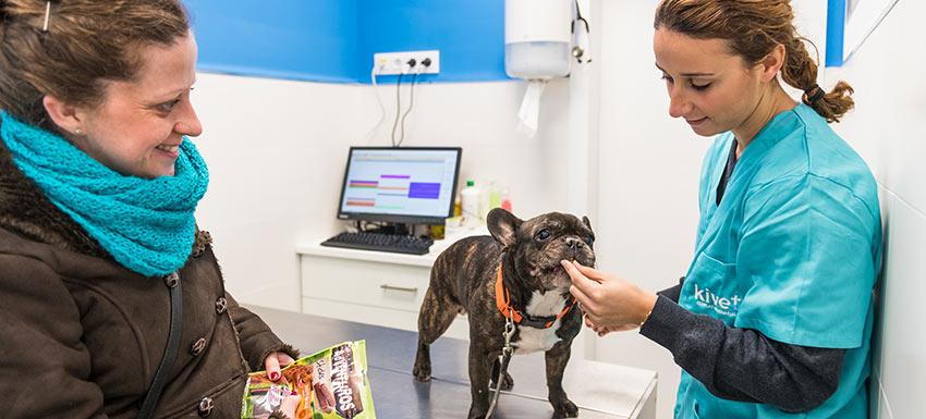 ¿Qué calendario de vacunación debe seguir tu perro?