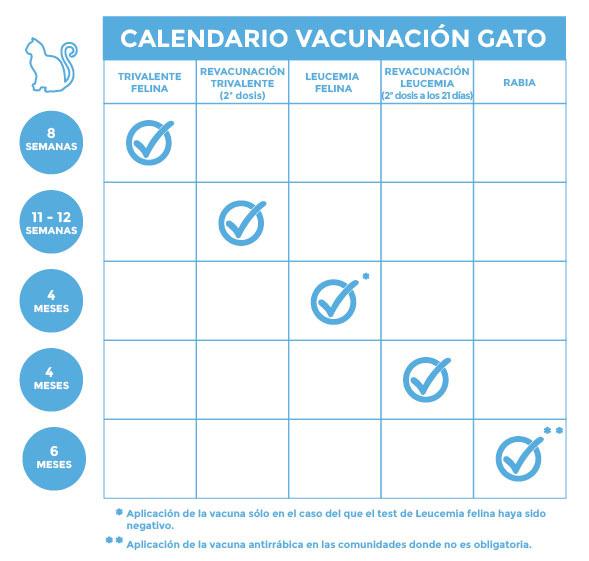Protocolo de vacunación felina Kivet