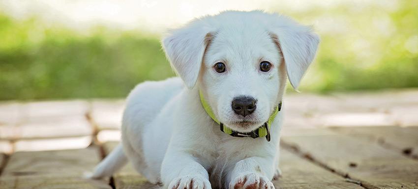 Guía para dar la bienvenida a un cachorro