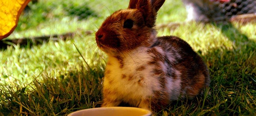 Consejos ante la llegada de un conejo a casa
