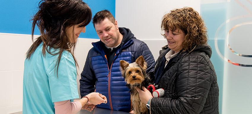 ¿Cuál es la edad ideal para esterilizar a un perro o perra?
