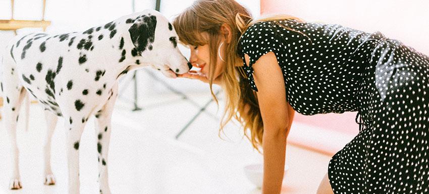 Consejos ante la llegada de un perro adulto a casa