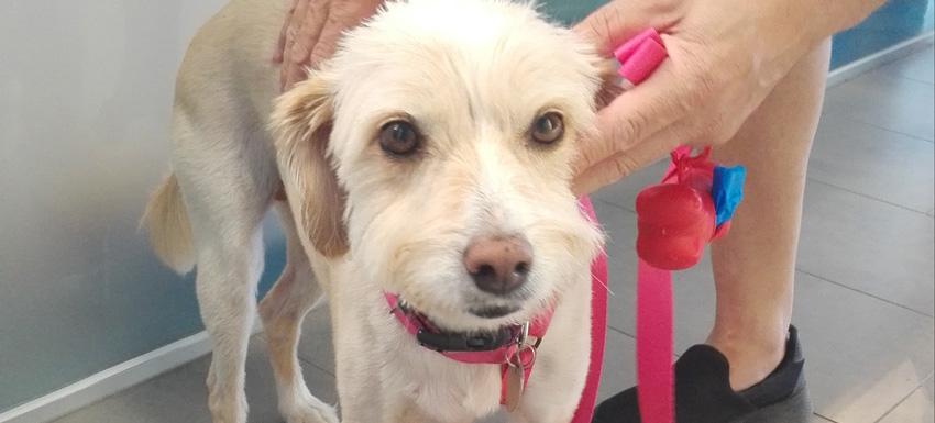 Caso clínico clínica veterinaria Kivet