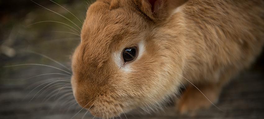 Coneja margarita acude a kivet para su diagnosticos