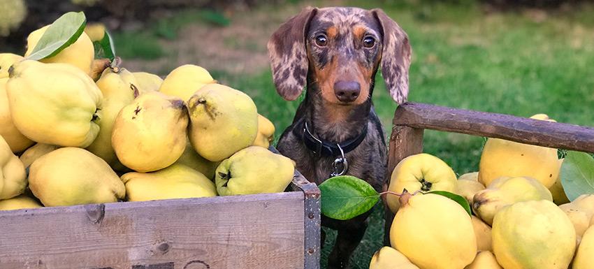 Alimentación en verano: verduras y frutas aptas para tu mascota