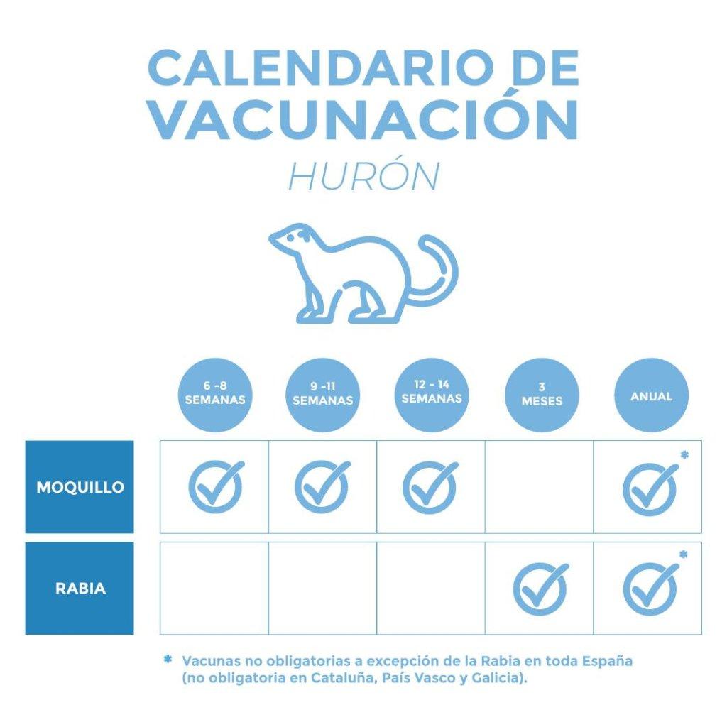 Calendario de vacunación del hurón