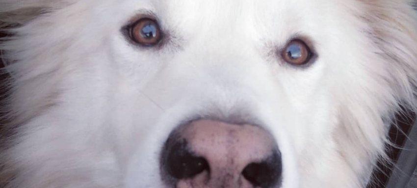 exito-intervencion-ulcera-nariz-perro