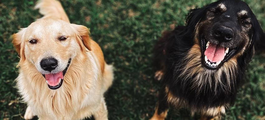 causas de la halitosis canina