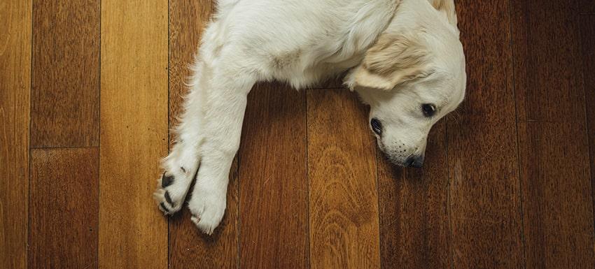 comportamiento en las mascotas en cuarentena