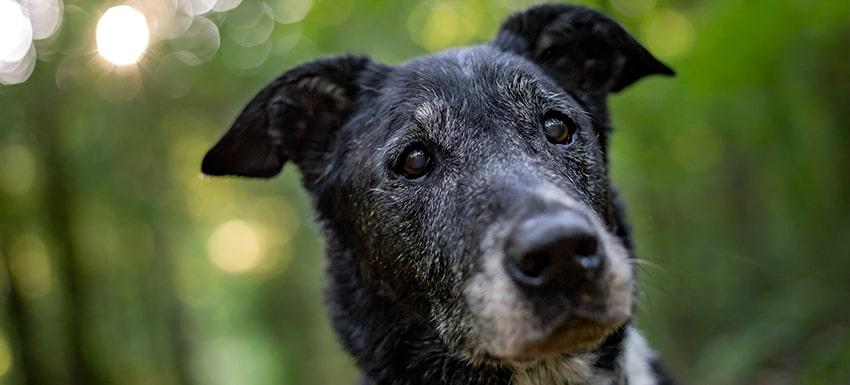 Esperenza de vida con perro con leishmania